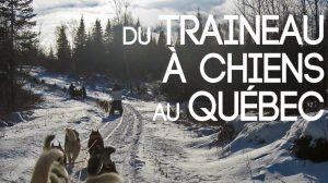 Faire du Traineau à Chiens au Canada